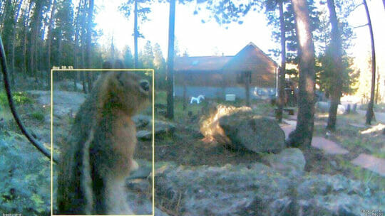 diy home security camera detects a squirrel